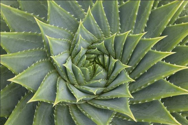 fibonacci trading guide